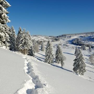 s16s-010-ml-ot-la-bresse-hiver2010-11-266