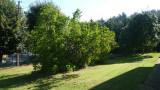 ga008-jardin-268008