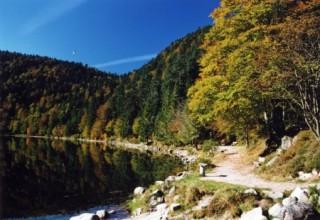 le-lac-des-corbeaux-a-la-bresse-106-253453-255780-304557