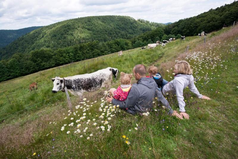 Balades familiales à petit prix Decouverte d'une ferme de Montagne La Bresse Hautes-Vosges ©Michel laurent
